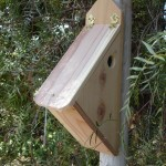 Bird House Plans for Finches