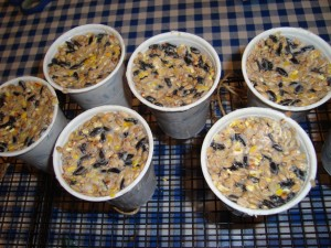 Bird Seed Cakes Homemade