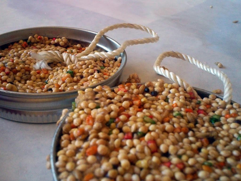 Bird Seed Cakes Recipe Gelatin