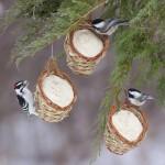 Bird Seed Suet Cakes