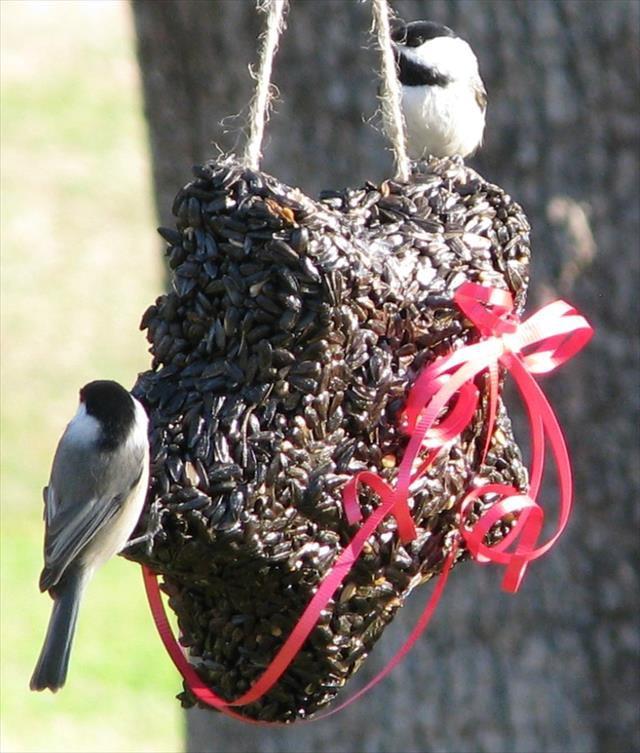 Bird Seed Wreaths Recipe