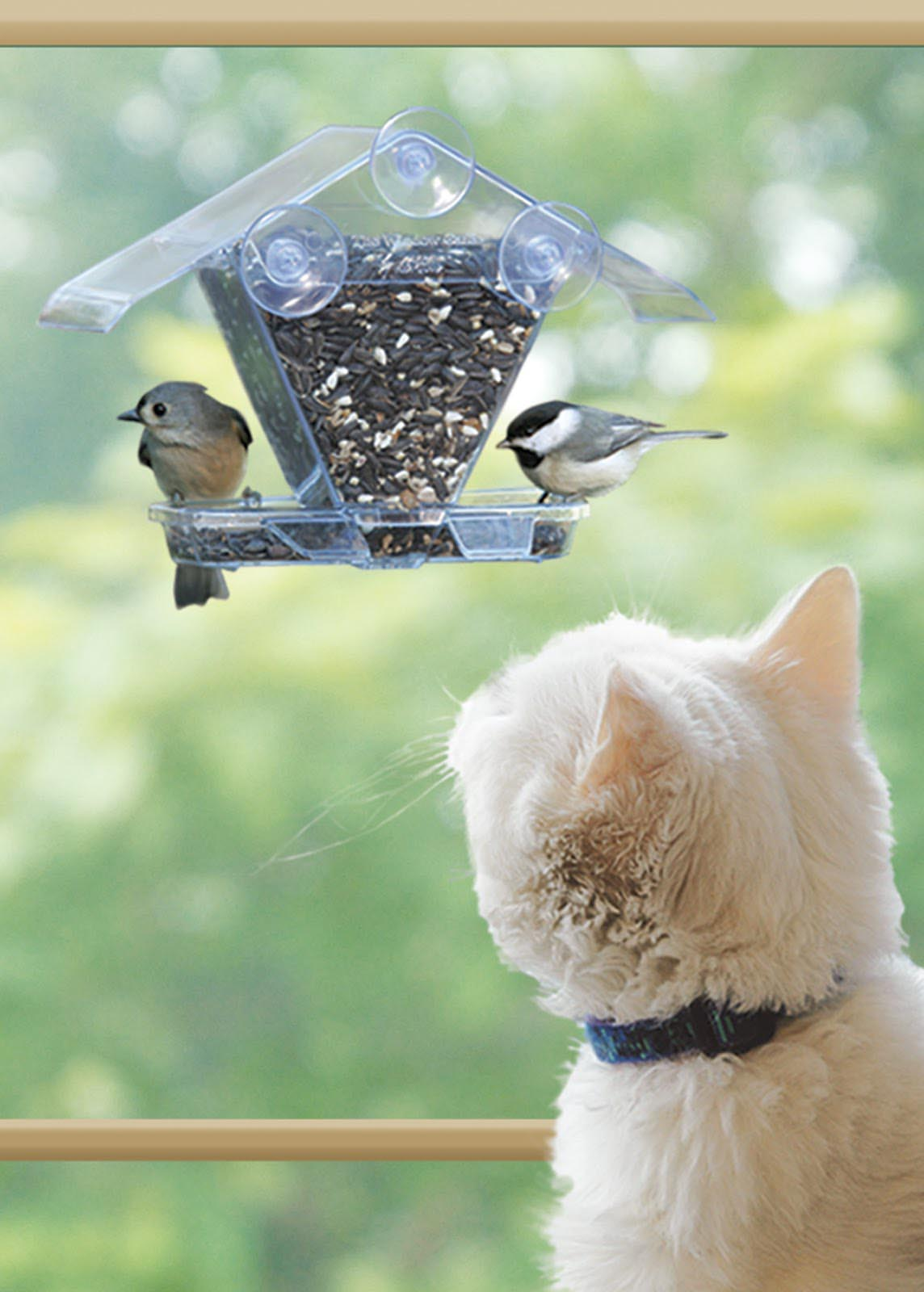 Black Capped Chickadee Bird House