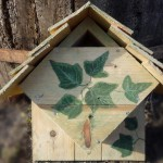 Chickadee Bird House Location
