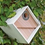 Chickadee Bird House Placement