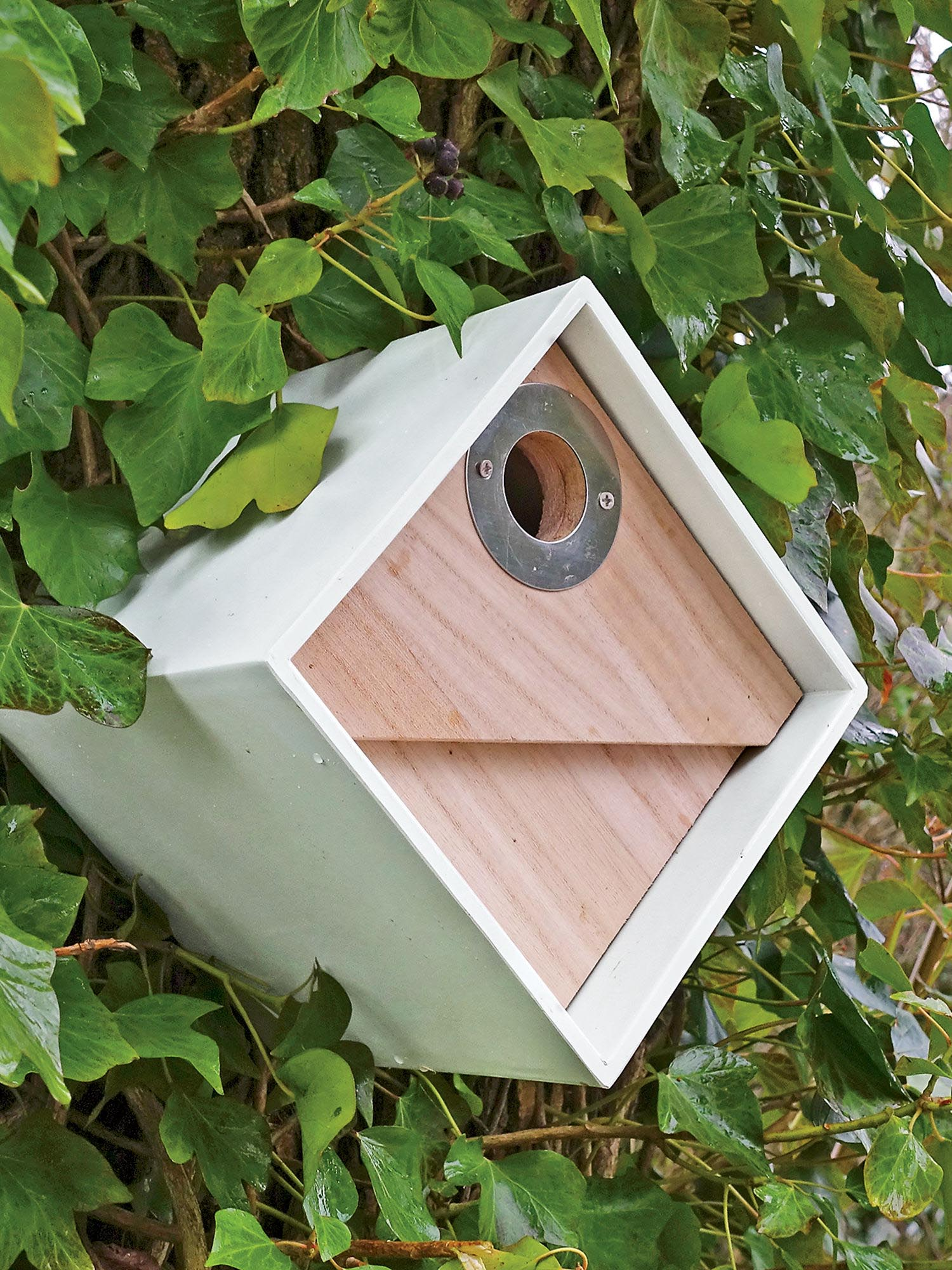Chickadee Bird House Placement