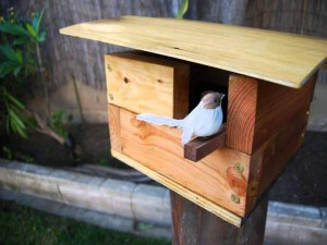 Finch Bird House Kits