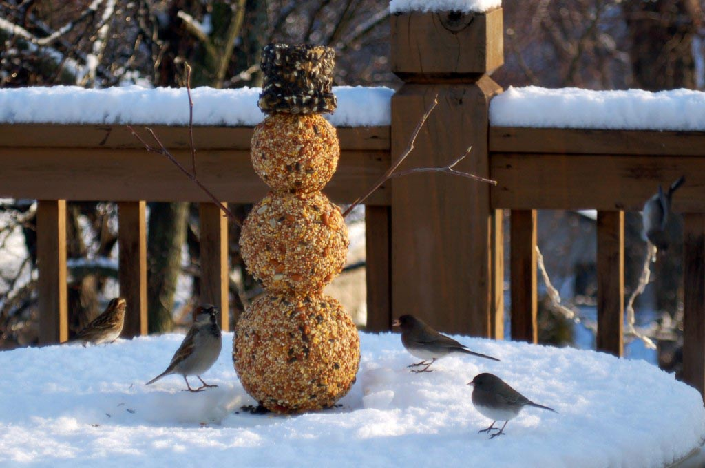 Homemade Bird Seed Wreaths
