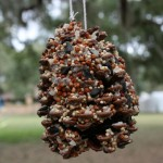 How Do You Make Bird Seed Ornaments