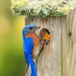 Keep Birds From Building Nests on House