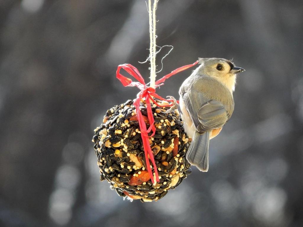 Make Bird Seed Ornaments