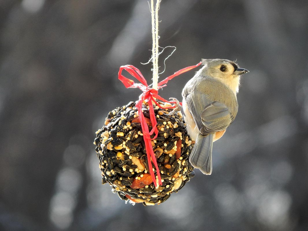 Make Bird Seed Ornaments
