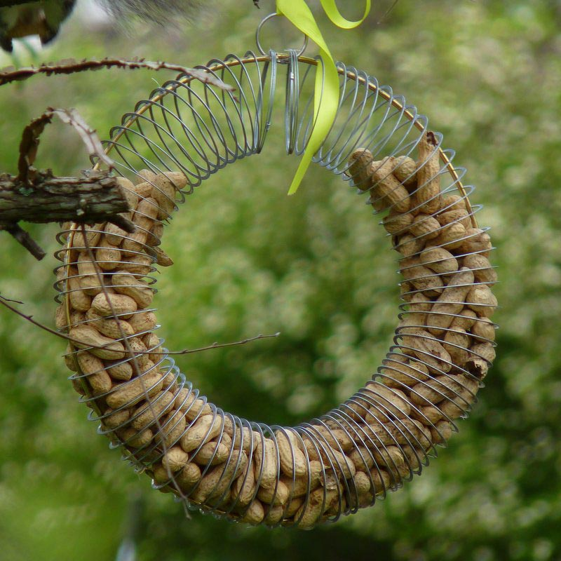 Make Bird Seed Wreaths