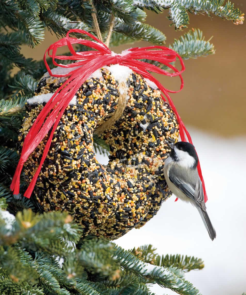Making a Bird Seed Wreath