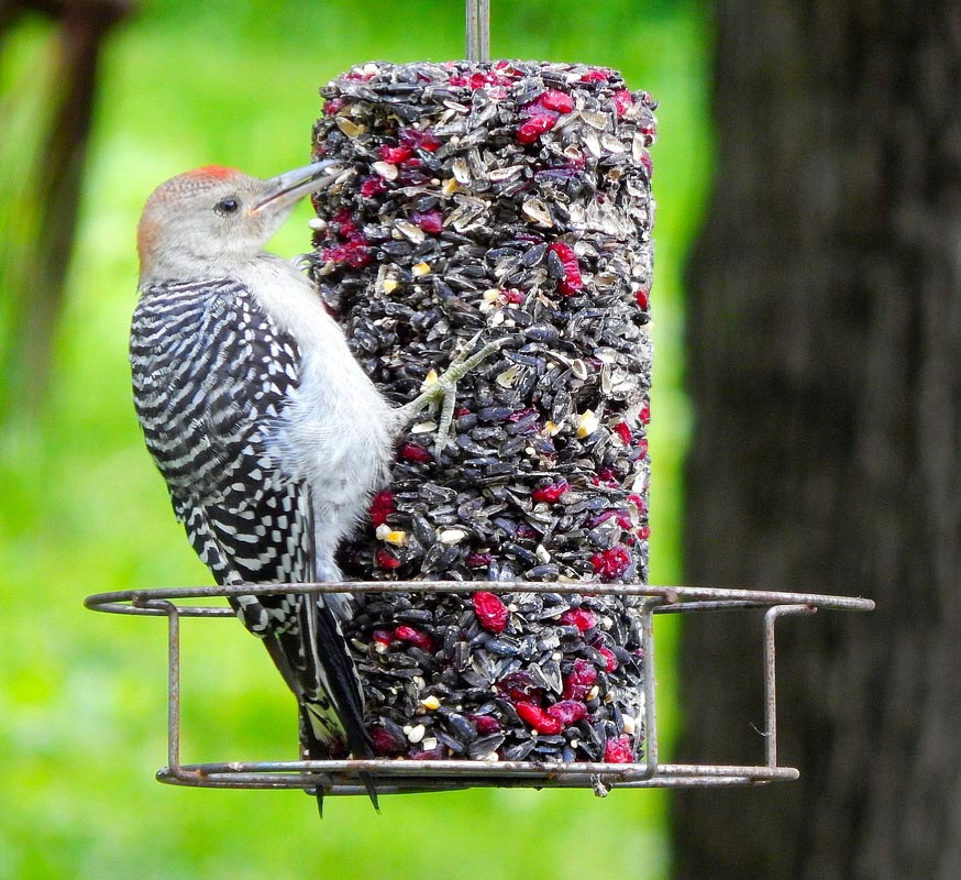 Mr. Bird Seed Cakes