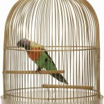 Outdoor Bird Seed Catcher