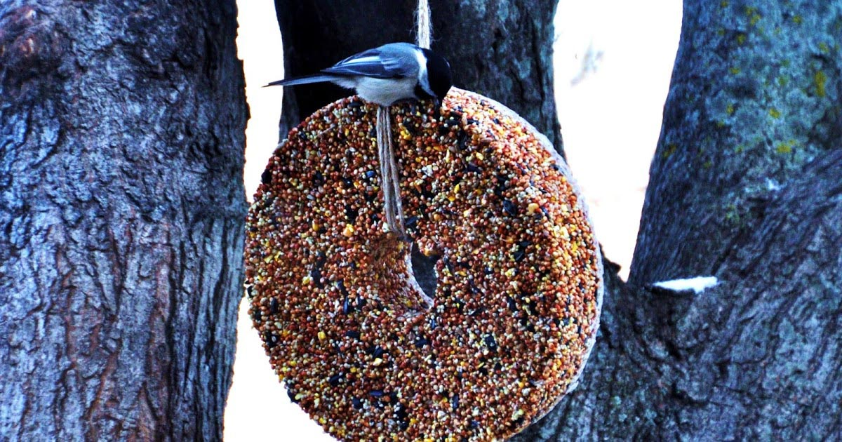Recipe Bird Seed Wreath