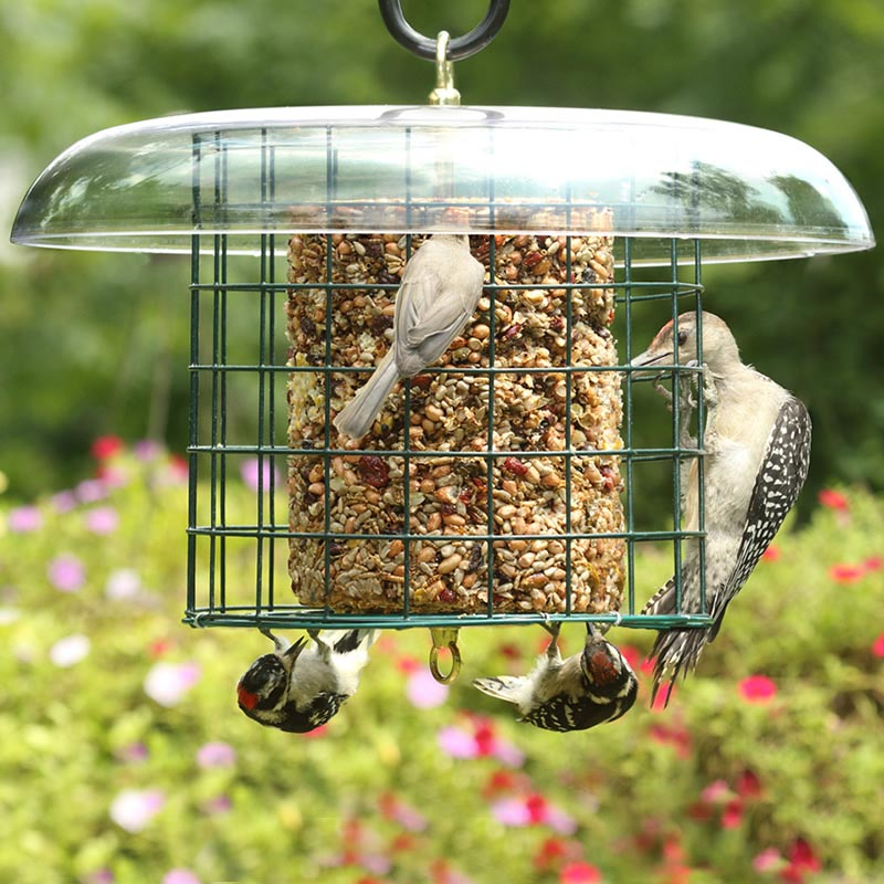 Seed Cake Bird Feeders