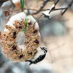 Seed Cake for Birds Recipe