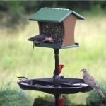 Seed Catchers for Bird Feeders