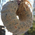 Suet Bird Seed Wreath