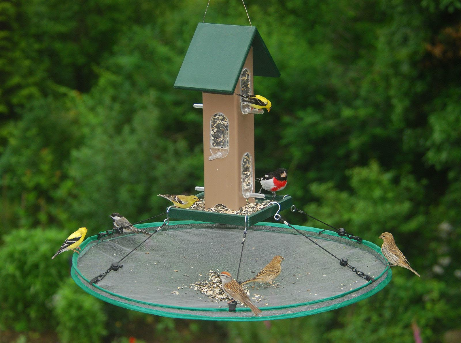 Wild Bird Seed Catchers