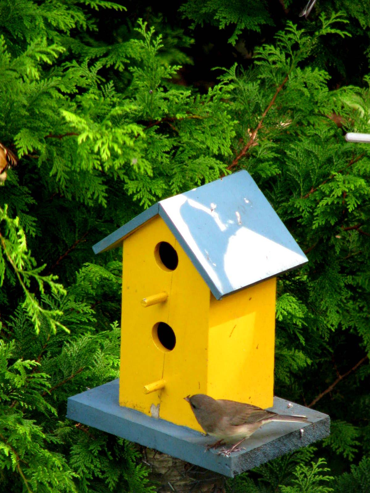 Yellow Finch Bird House Plans